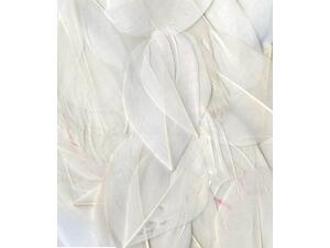 Φτερά Artemio λευκά 6cm 3gr